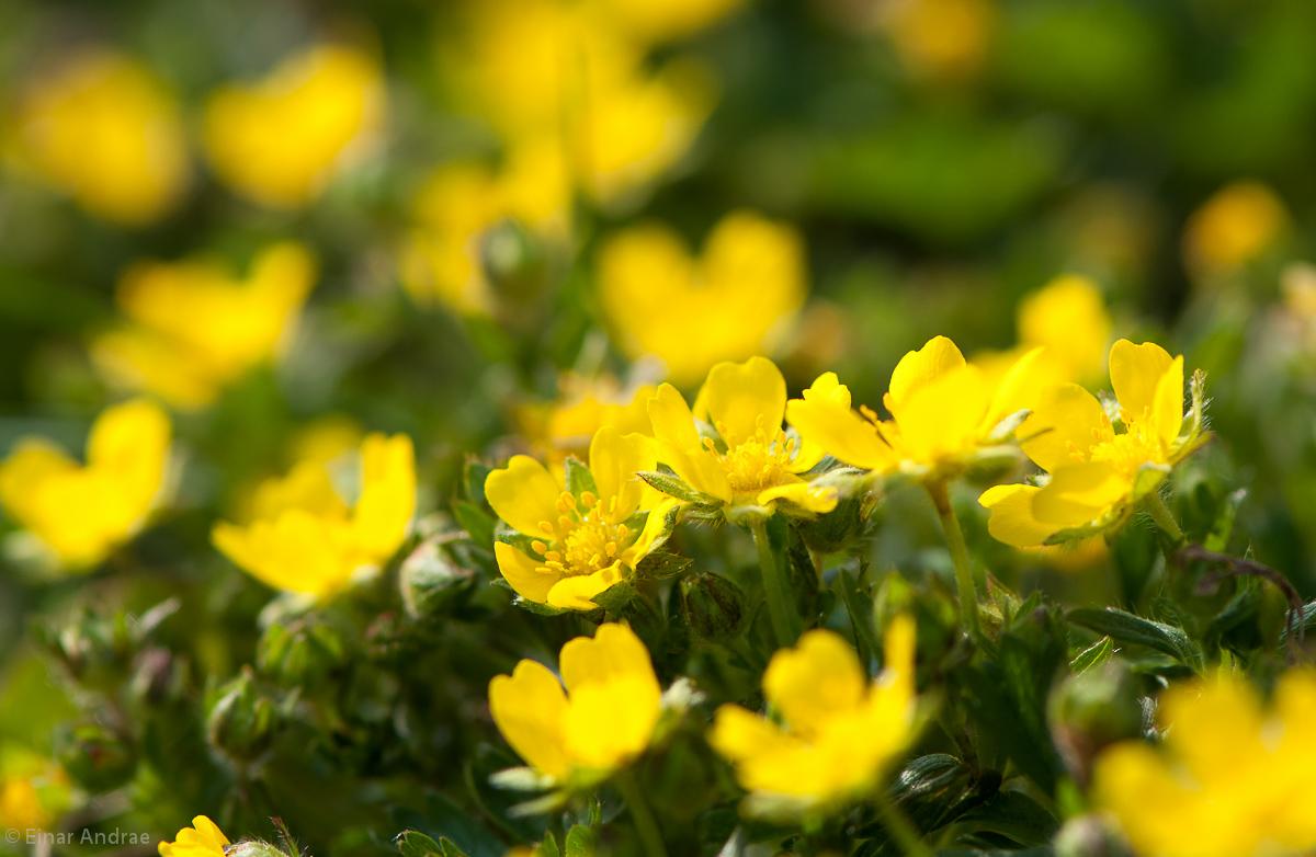 Gelbe Blümchen