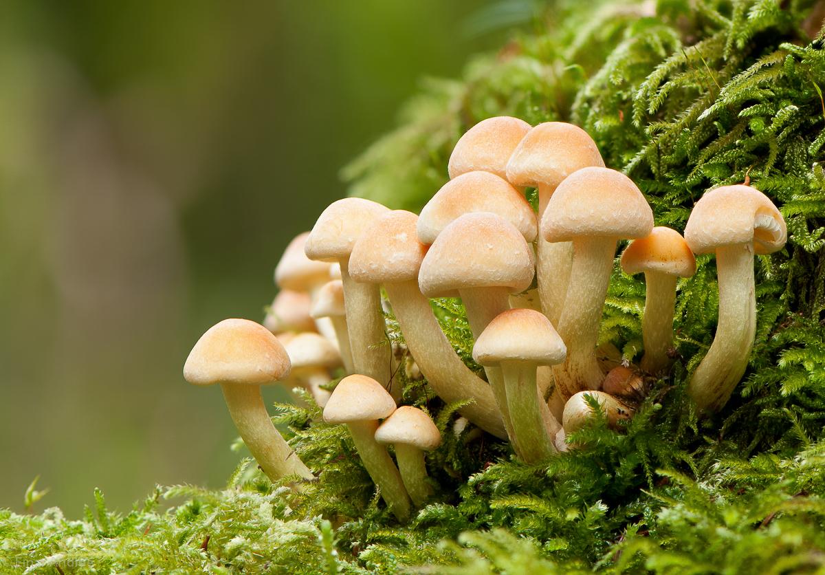 Pilzgruppe im Moos