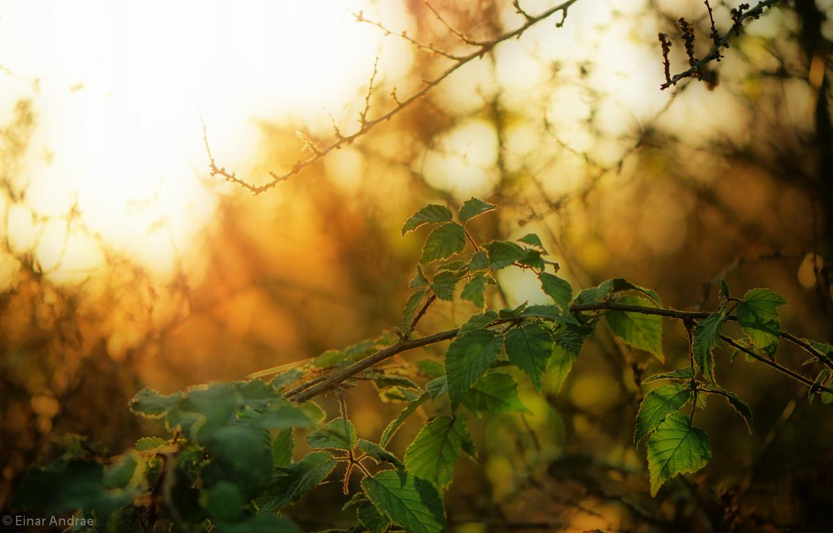Sonnenuntergang im Herbst