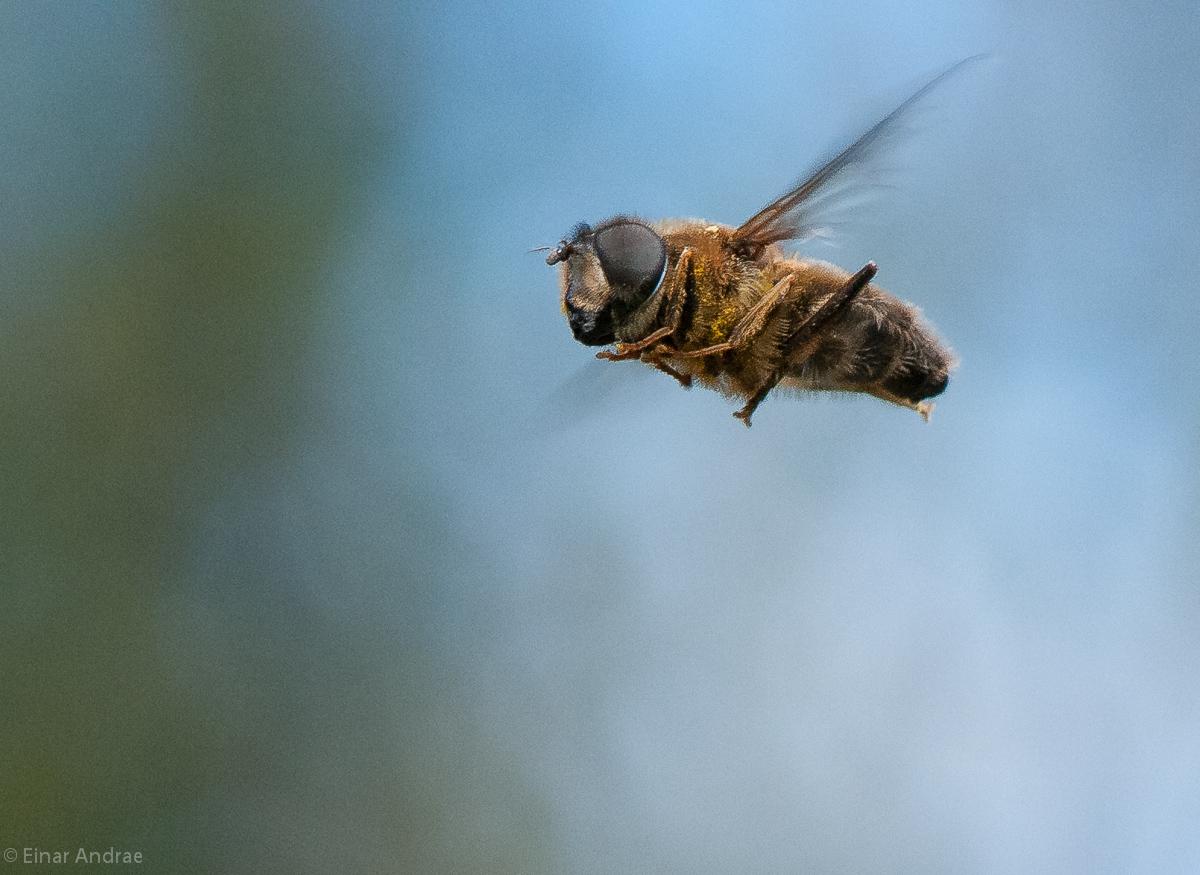 Fliegende Fliege