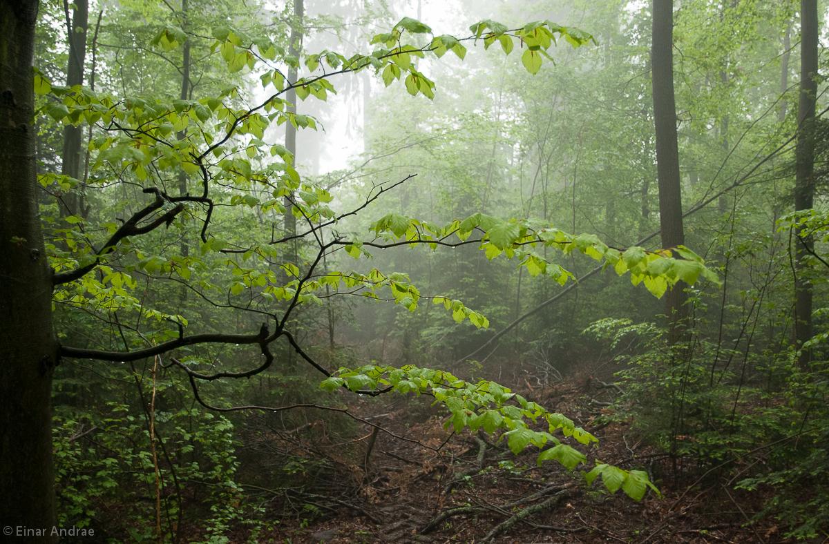 Nebel im Wald