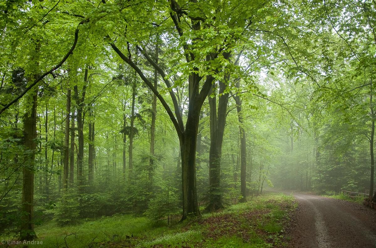 Wald Weg im Nebel